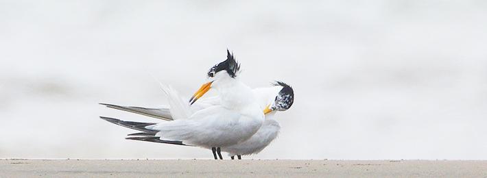 Mythical Bird