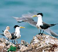 Bird Observation